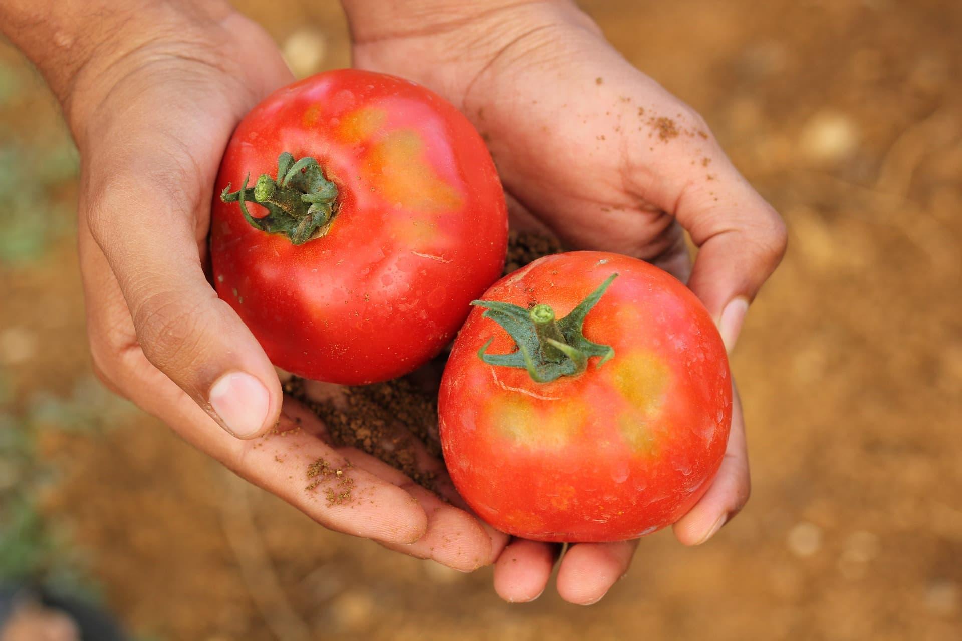 zupa pomidorowa dla dzieci latwa